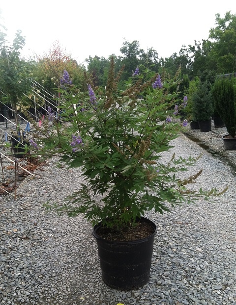 Vitex Shoal Creek 15g